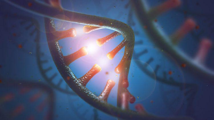 РНК и ДНК